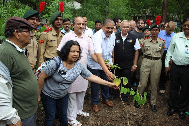 Tree Plantation 3